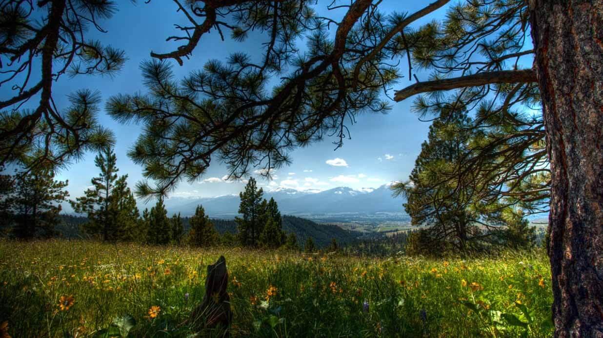 Оценка земель лесного фонда фото