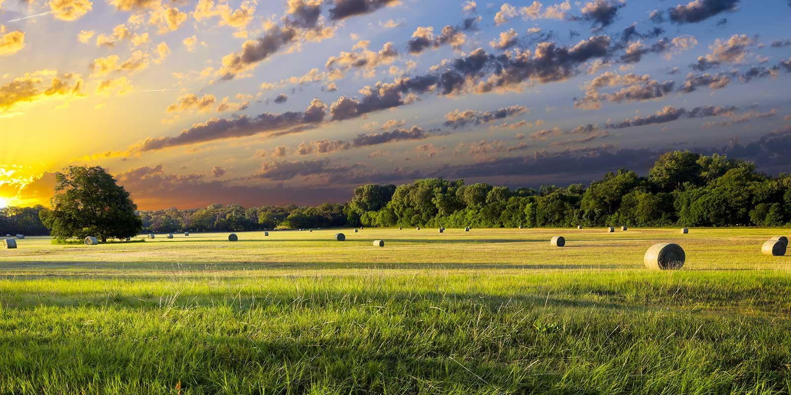 оценка сельскохозяйственных земель фото